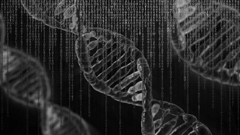 Чим відрізняється генотип і фенотип